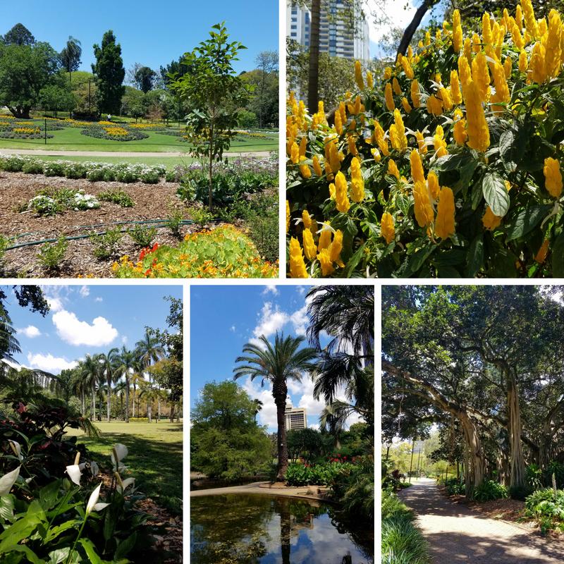 Brisbane Australia City Botanic Gardens