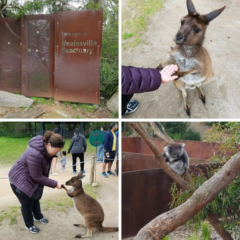 Melbourne Australia Healesville Sanctuary Kangaroo Koala