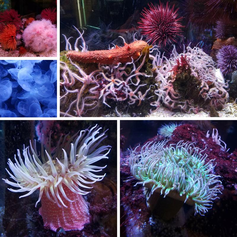 Cabrillo Marine Aquarium, San Pedro CA, San Pedro