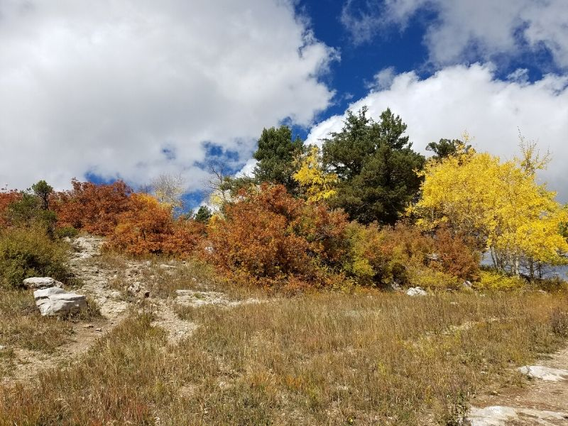 Row of trees at top of hill with brown and yellow leaves, big puffy clouds in the sky