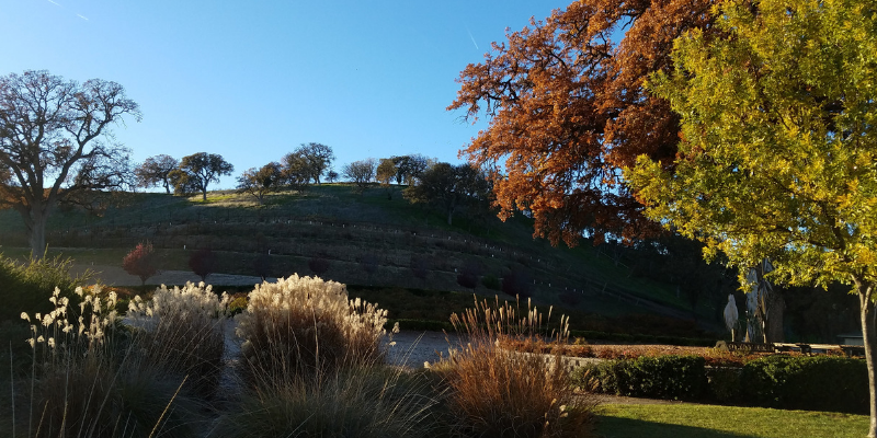 Rolling Hills in Paso Robles