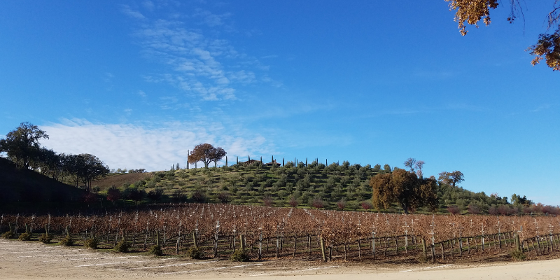 Paso Robles CA Vineyard