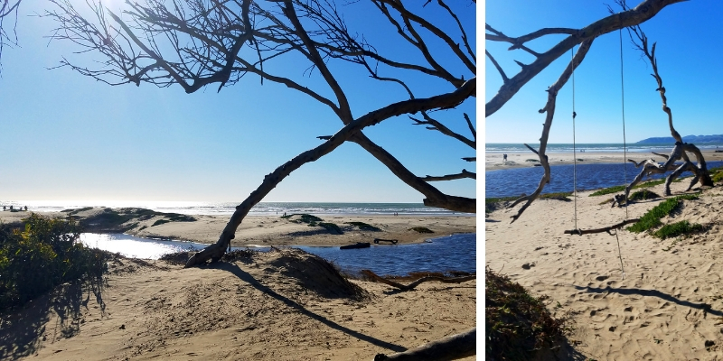Collage of Pismo Beach coastline and swing hanging from a tree on the beach.
